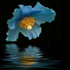 Beautiful blue flower.