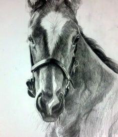 Karmel Timmons: Equestrian Art In Pencil: Amazing work! Horse Pencil Drawing, Pencil Drawings Of Animals, Horse Drawings, Pencil Sketching, Pretty Drawings, Amazing Drawings, Realistic Drawings, Horse Sketch, Equine Art