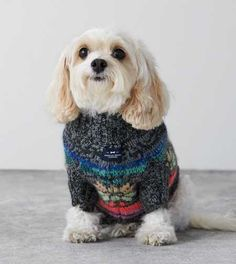 American Beagle Outfitters Fair Isle Sweater - Love this! I want it for my puppy! Really Cute Puppies, I Love Dogs, Cute Dogs, Beagle Gifts, Dog Gifts, American Beagle, Crazy Dog Lady, Pet Fashion, Animal Pictures