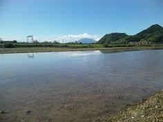 2013年6月12日  田植え準備完了!! 代?きも終わって水を湛えて田植えを待っている田圃。 ゲートらしきものは九州自動車道、更に向こうは桜島。 今日は良い天気で、真夏を感じさせます