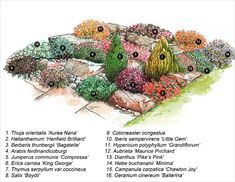 Виды растений для альпийской горки
