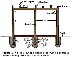 Grape arbor how-to {Need an arbor like my grandfather's...but I won't have the 30-year old grape vine, though}