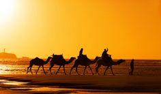 Marokko: Königsstädte und Karawanen: Lesen Sie die Reisetipps in den Reise-Nachrichten beim Seniorenblog: http://der-seniorenblog.de/seniorenreisen/reisenachrichten-reisenews/ Bild:djd/ECCO-Reisen GmbH/shutterstock