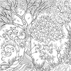 Enchanted Forest: An Inky Quest & Coloring Book: Johanna Basford: 6063887956574: Amazon.com: Books