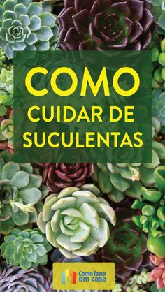 Discover recipes, home ideas, style inspiration and other ideas to try. Shade Perennials, Shade Plants, Mini Cactus, Plastic Bottle Crafts, Recycled Garden, Bedroom Plants, Rare Flowers, Cactus Y Suculentas, Little Plants