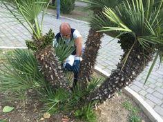 Bari effetuati interventi di rattizzazione nel giardino di piazza Garibaldi