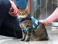 Katze therapiert am Flughafen gestresste Passagiere.