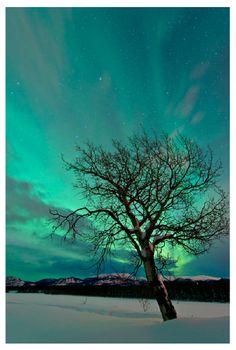Auroras, Taken by Jonathan Tucker on January 2014 @ Whitehorse,Yukon Amazing Pics, Beautiful Pictures, Earth's Magnetic Field, Midnight Sun, Canada, Aurora Borealis, Some Pictures, Amazing Nature, Beautiful World