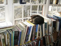 books and cats :O)  too much sun for the books, though