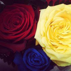 tri colour roses for grad :D Art Clipart, Mondrian, Paint Shop, Textile Patterns, Pattern Wallpaper, Bella, Blue Yellow, Superman, Color Blocking