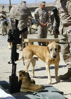 It's as if the dog knew exactly what he was looking at. #military honors fallen #Veteran