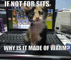 #kitten #animal #humor http://bitloaded.com/wp-content/uploads/2011/11/kitten-warm-computer.jpg                                                                                                                                                      More