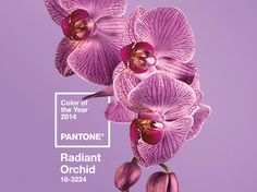 "Radiant Orchid is the new ""in"" color for 2014, according to the institute, which gave us Emerald this year."