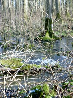 Bos bij de Gesteentetuin (bij Schokland)
