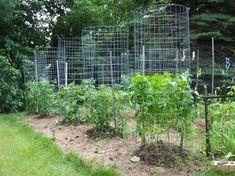 Green Zebra Market Garden: Make Your Own Sturdy Tomato Cages Hydroponic Gardening, Hydroponics, Organic Gardening, Aquaponics System, Aquaponics Fish, Garden Trellis, Garden Planters, Culture Tomate, Garden Online