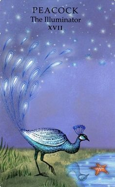 Animal Wisdom Tarot - Peacock