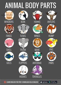 English Vocabulary: Animal Body Parts English Writing Skills, Learn English Grammar, English Vocabulary Words, Learn English Words, English Phrases, English Language Learning, English Study, English Lessons, Teaching English