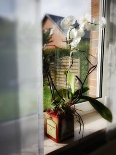 Einrichtungs Blog mit Fokus auf die Wandgestaltung. Terrarium, Glass Vase, Photo And Video, Plants, Home Decor, Wall Design, Terrariums, Homemade Home Decor, Plant