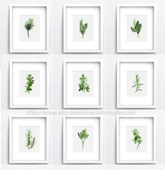 Set of 9, Herbs And Spices, Kitchen Decor, Herb Chart, Botanical Print, Plants Gift Ideas, Green Leaves, Watercolor paintings