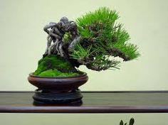 Exposed root bonsai-Neagari