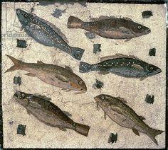 Fish (mosaic). Roman, (1st century AD) / Museo Nazionale, Rome, Italy /