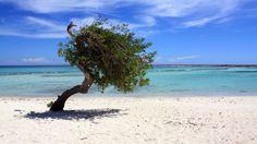 Aruba Tourism Authority Offering Atlanta Falcons Free Vacation