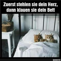 funny picture & # steal your bed . jpg - one of 26128 files in the . Funny Animal Pictures, Funny Photos, Cool Pictures, Kittens Cutest, Cats And Kittens, Cute Dog Drawing, Funny Cats, Funny Animals, Allergic To Cats