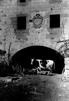 VOLUMEN Y SOPORTE: 1 fotografía en blanco y negro, negativo en placa de vidrio