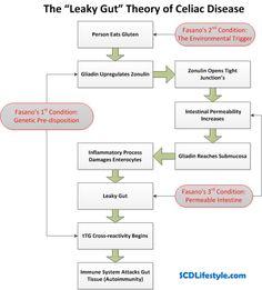 leaky-gut-theory-of-celiac-disease