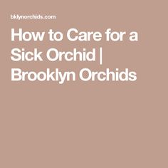 How to Care for a Sick Orchid | Brooklyn Orchids