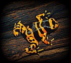 animales peligrosos del mundo y raros