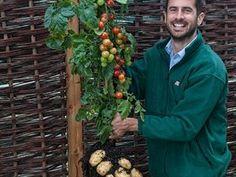 Nová odrůda rodí najednou rajčata i brambory.