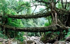 Natural Bridge of the Cherrapunjee. They spend generations guiding roots and vines to grow over rivers so they can still cross them in the rainy season. They know how to appreciate nature and harness it without hurting it.