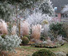 Sandfrauchen, piante preferite in inverno - Garten - Gestaltung