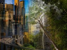 Kyoka the road to ruin winding though skyscrapers casting long shadows on trees we once revered as the towers of nature © Elizabeth Alford 2016 See more @ Elizabeth Alford Poetry Response to our In…