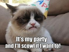 Looking for the worlds best Grumpy Cat memes? This is where you will laugh for butt off at a list of this famous cat. Grumpy Cat Quotes, Meme Grumpy Cat, Cat Memes, Funny Memes, Hilarious Sayings, 9gag Funny, Funniest Memes, Funny Signs, Funny Shit