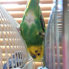 鳥フォトコンテスト「みく」さん