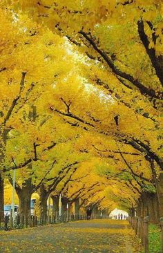 London yellow tree line!!! Bebe'!!! Lovely fall yellow foliage!!!