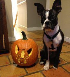 Stogie and his jack-o-lantern