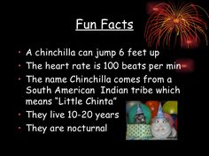 chinchilla fun facts - Google Search