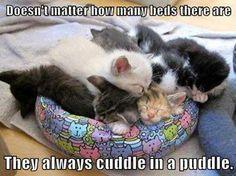Cuddle Puddle :-)