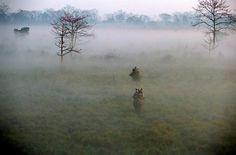 Safari en elefante en el Parque Nacional de Chitwan