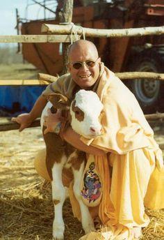 Hugs, Lamb, Cow, Animals, Big Hugs, Animales, Animaux, Cattle, Animal