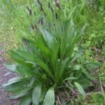 Erbe spontanee commestibili: riconoscerle e coltivarle Champs, Chlorophytum, Edible Plants, Natural Health, Lawn, The Cure, Green, Nature, Flowers