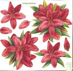 3d fleurs - Page 3