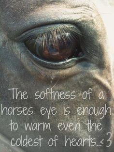 A horses eye (: