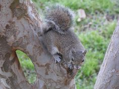 Hello, squirrel. I shall call you Nibbler and you shall mine.