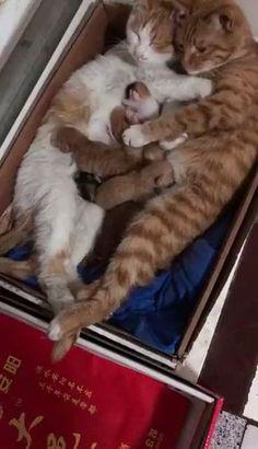 Happy Cat Family Kittens most cute kittens Cute Funny Animals, Cute Baby Animals, Animals And Pets, Funny Cats, Grumpy Cats, Animals Images, Cute Cats And Kittens, Kittens Cutest, Pet Cats