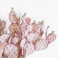 Are pink cacti a real thing? Cause I want one. (Thanks so much to everyone who sent me the photosh...