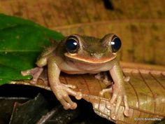Photo: The heart-melting smile of a slender-legged tree frog